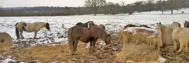 ponies bushey